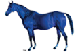 Photo of blue Lexington horse